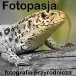 fotopasja-300x300